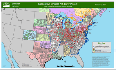 Initial county EAB detections in North America